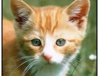 Să învăţăm animalele domestice şi sunetele acestora!